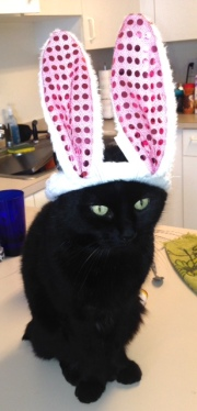 James the cat as The Easter Bunny :)