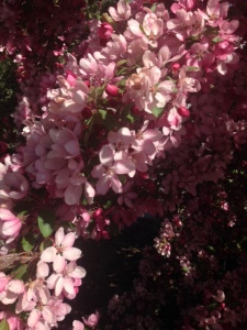 Beautiful flowers on my walk