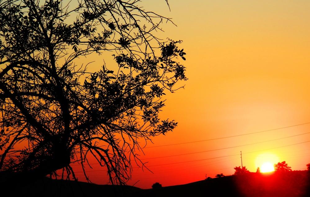 1 Sunset Tree V.1