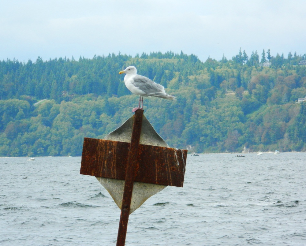 1 Seagull Sign