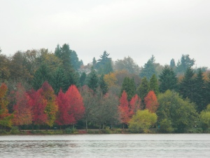 1 Green Lake Trees