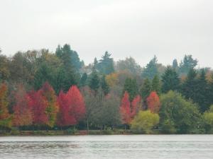 1 Green Lake Trees