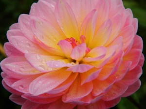 1 Pink Glowing Flower