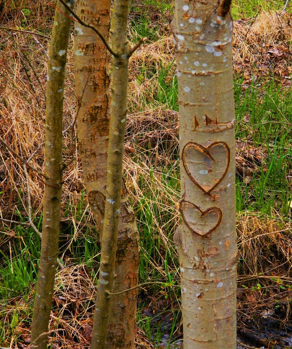 1 Tree Hearts.JPG